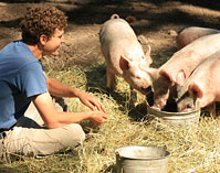 farm stay feeding pigs