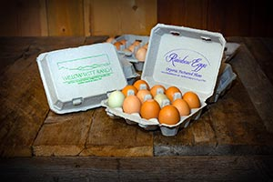 certified organic chicken eggs for sale