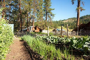 Organic Garden at Willow-Witt Ranch